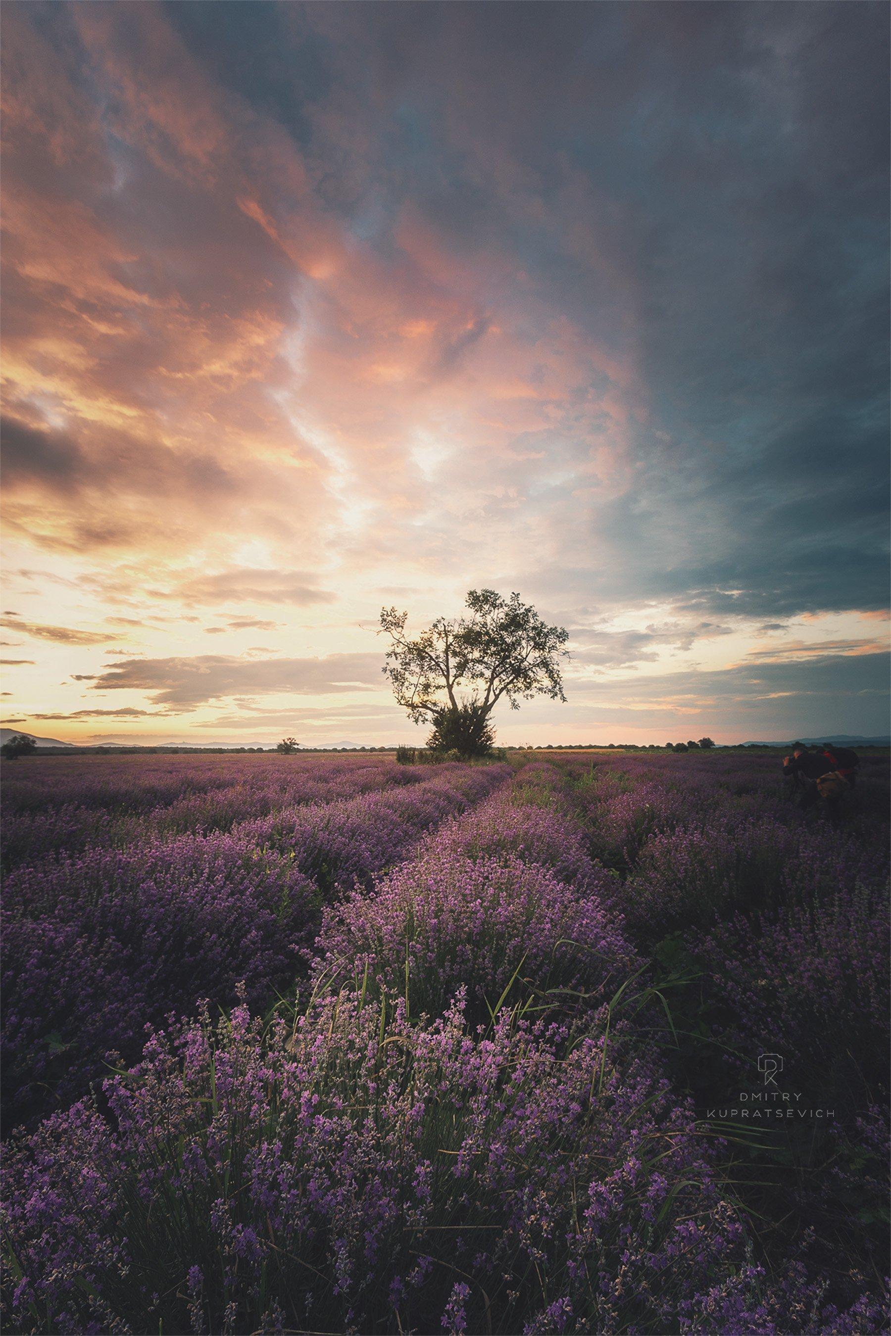 болгария, рассвет, лаванда, пейзаж, Купрацевич Дмитрий