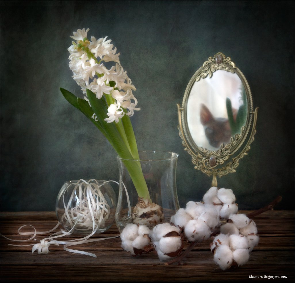 гиацинт, хлопок, зеркало, отражение кошки, стекло, отражение, белый, натюрморт, Eleonora Grigorjeva
