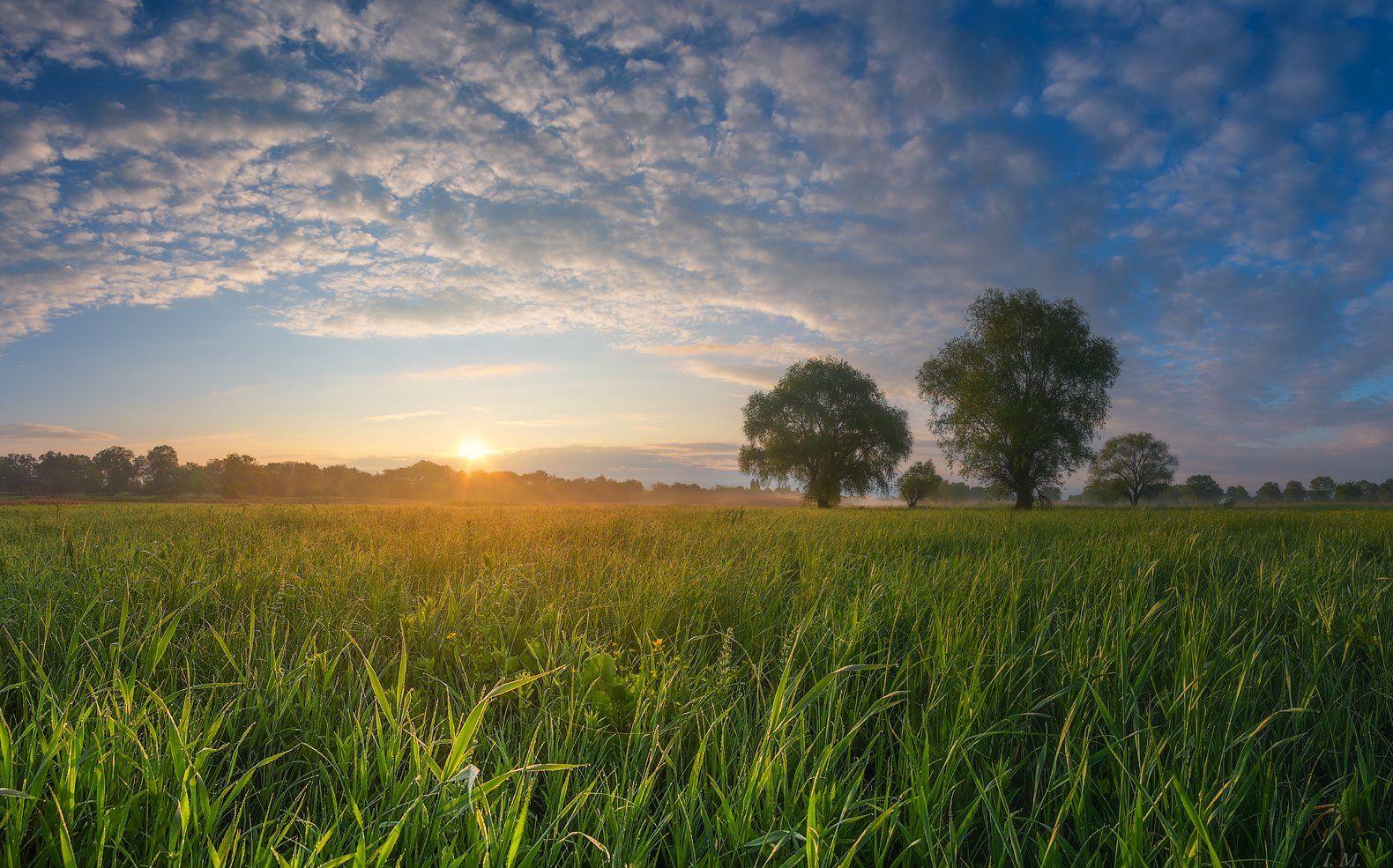 весна, май, утро, рассвет, луг, травы, I'M