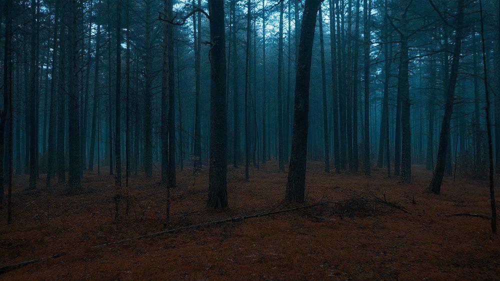 forest dark estonia fog, Aleksandr Kljuchenkow