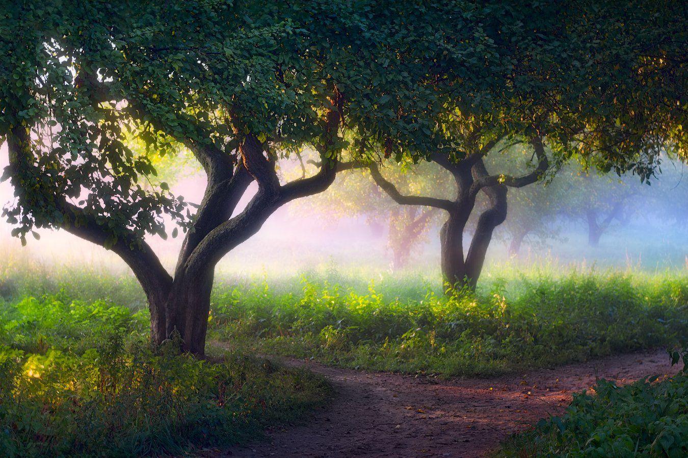 лето, вечер, свет, туман, деревья,, Сергей Шабуневич