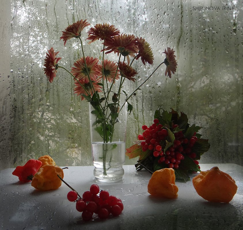 осень астры перец хабанера калина мокрое стекло, Шипунова Ирина