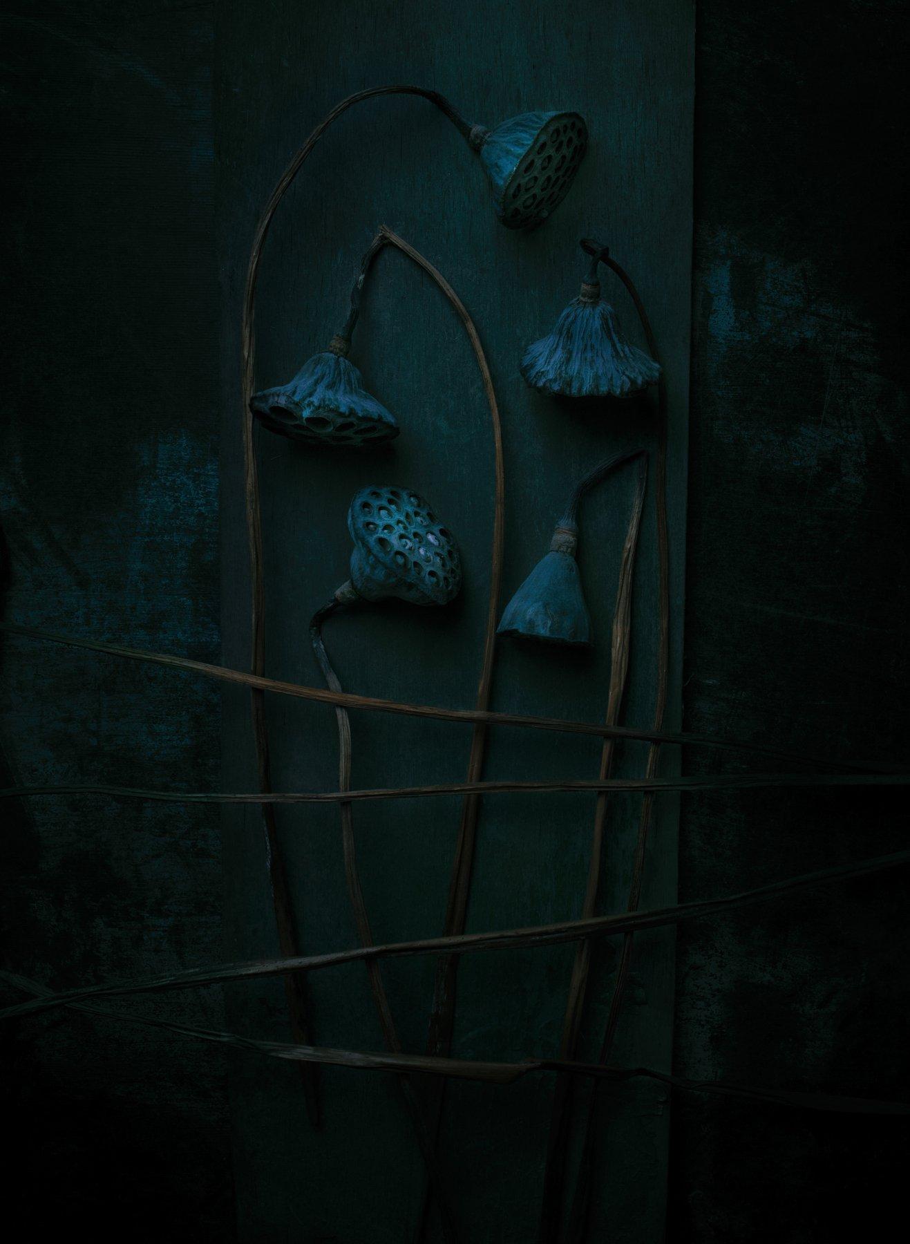 лотос, цветы, сухоцвет, натюрморт,, Наталья Голубева