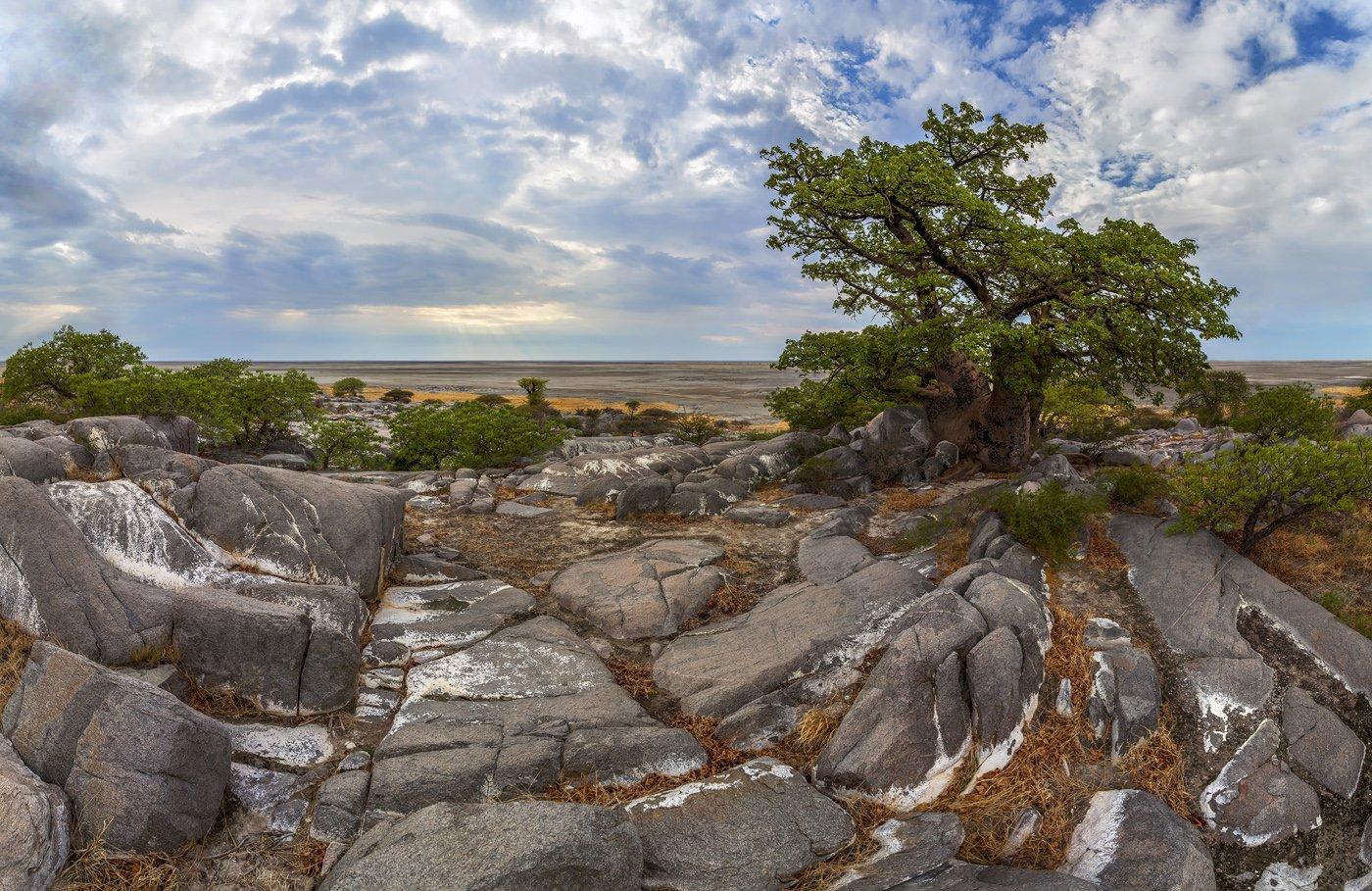 остров Кубу, Макгадикгади, Ботсвана, Африка, баобаб, солончак, Арсений Кашкаров