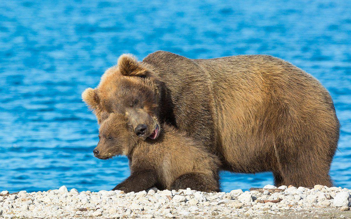Медведь, Камчатка, Власов Егор