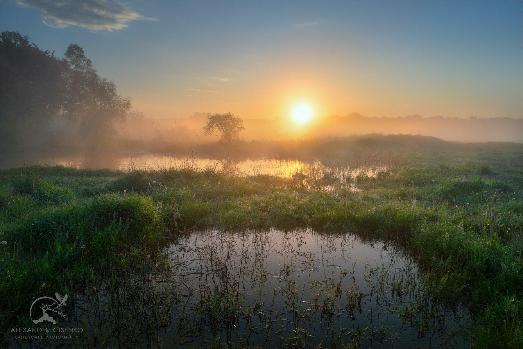 утро, луг, весна, солнце, рассвет, туман, Александр Киценко