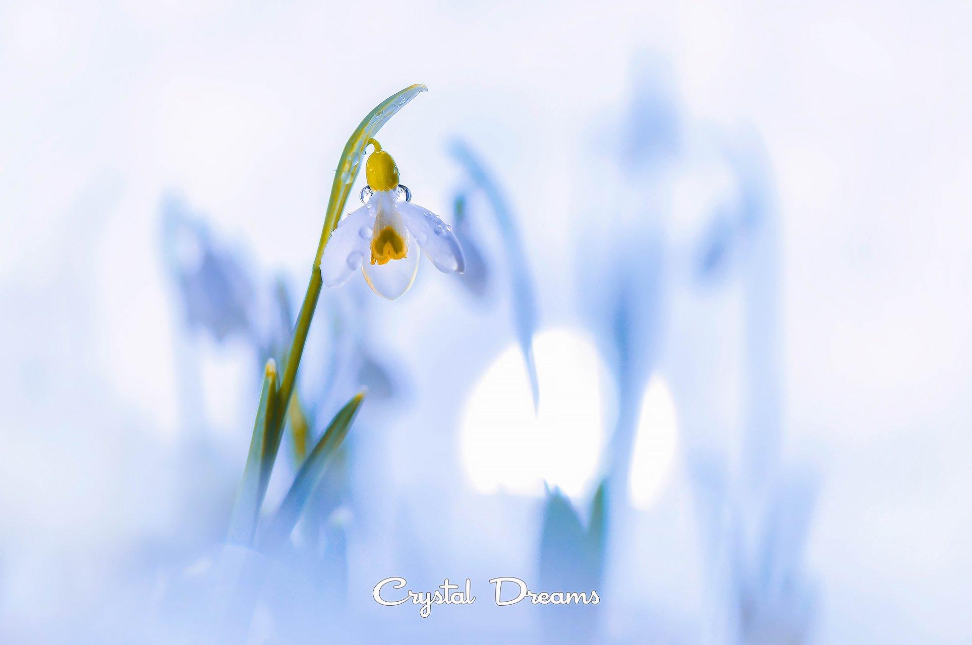 spring, Крылова Татьяна