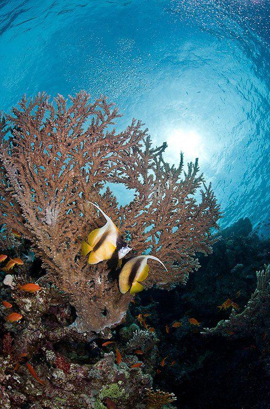 море, рыба, подводная съемка, красноморская кабуба, коралл, солнце, пара, Natalia Semko