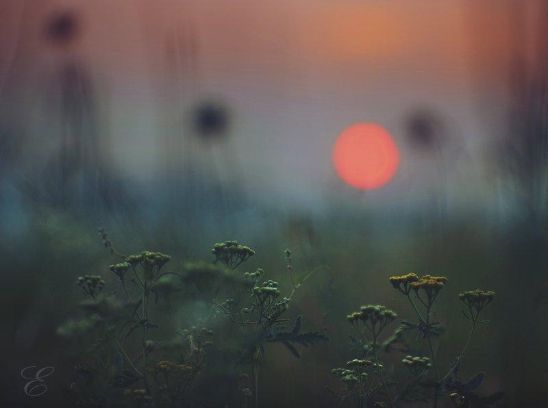 природа, красота, солнце, закат, трава, цветы, ожидание, Ольга Брага (Eglantier)