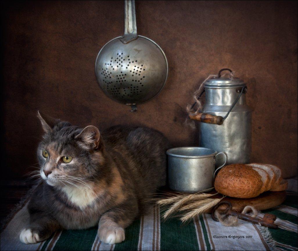 кошка, дуршлаг, бидон, кружка, хлеб, колосья, натюркотики, Eleonora Grigorjeva
