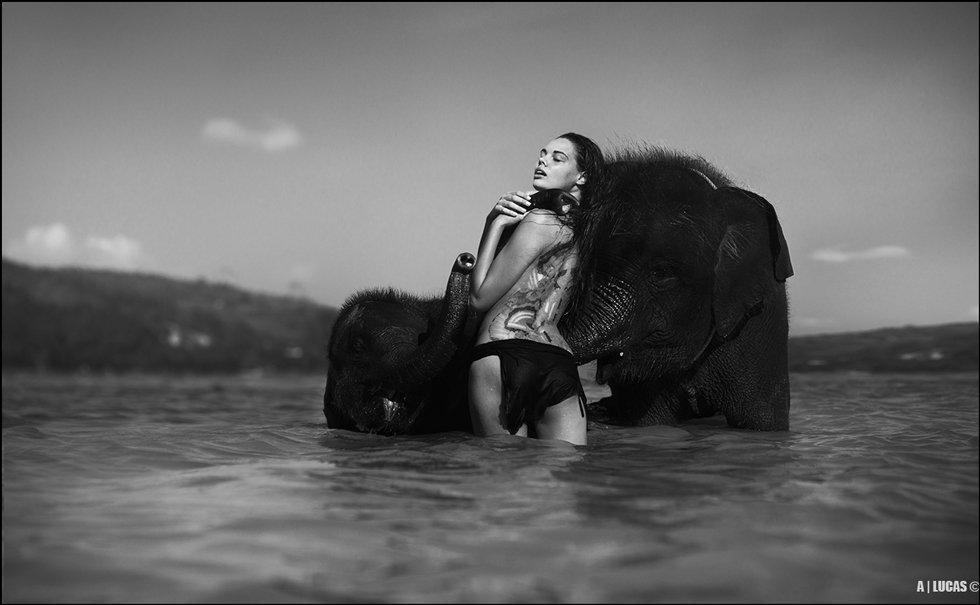 bone, elephant, ©, Andrew Lucas