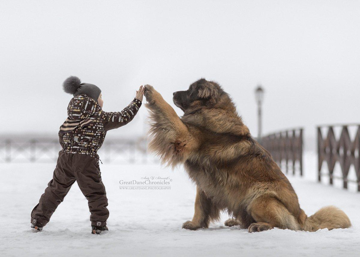 зима, собаки, леонбергер, дети, Андрей Селиверстов