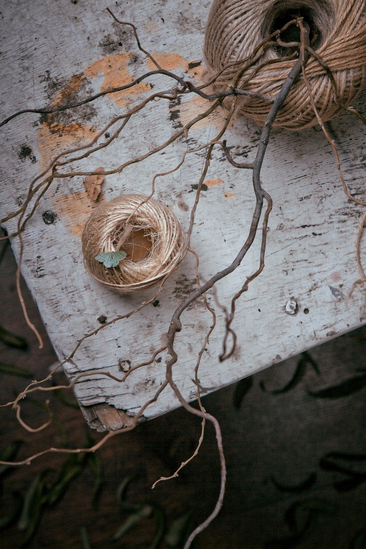 Бабочка, мотылек, суровая нить, ветви, ива, натюрморт, Наталья Голубева