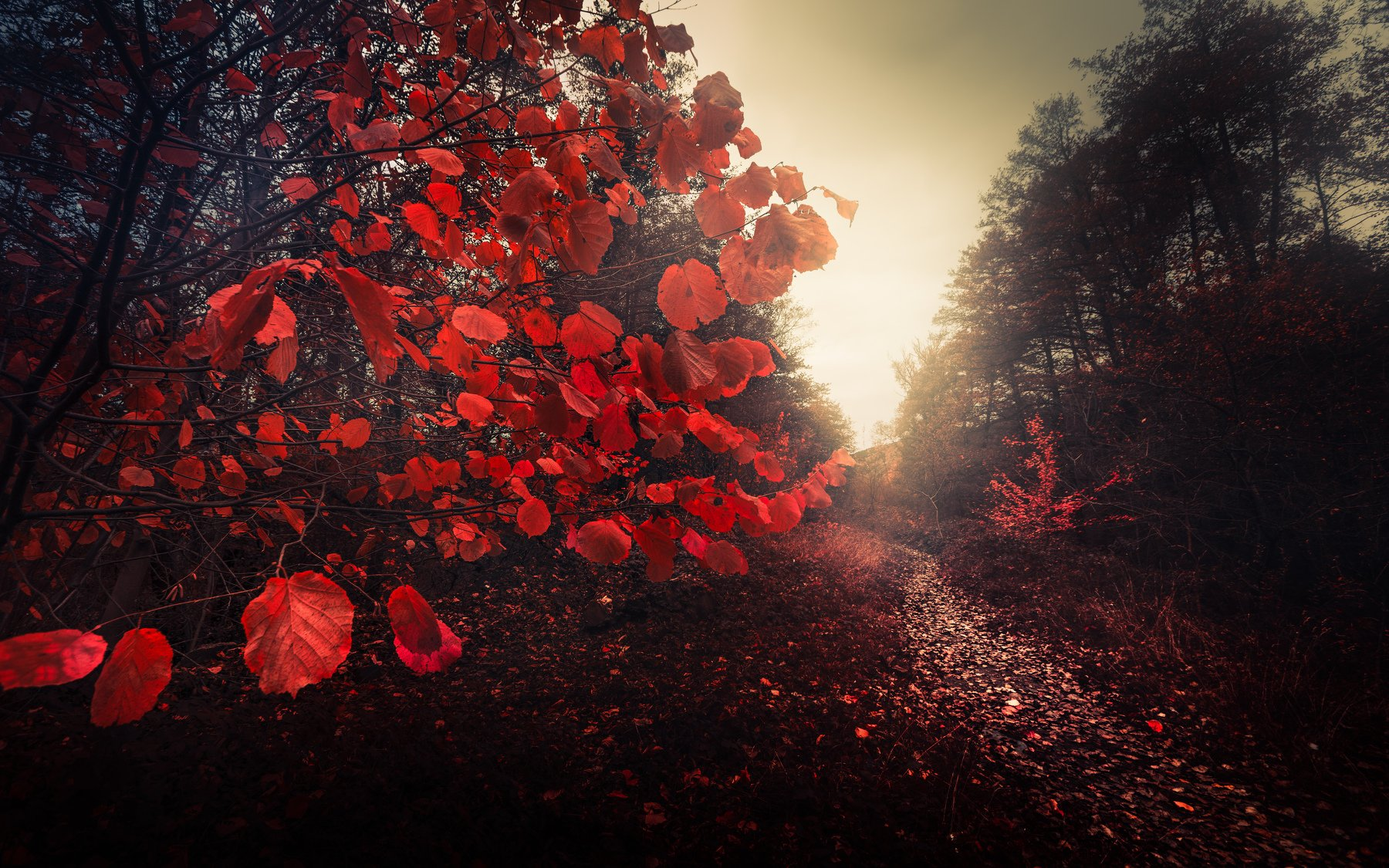 autumn, fall, landscape, trees, forest, woods, bulgaria, colors, nature, fog, mist, rain, october, red, leaves, fairytale, Кристиян Младенов