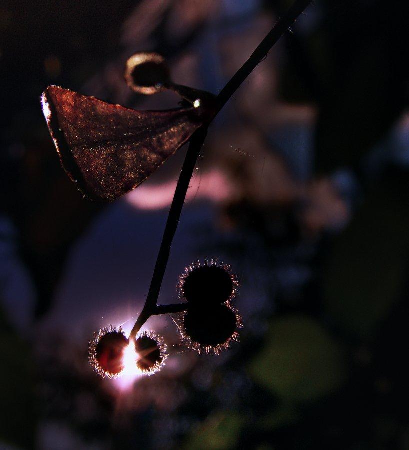wake,macro,summer,elevenart,, Emerald Wake ©