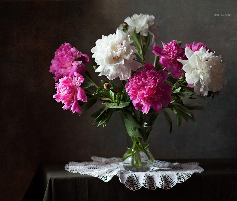 натюрморт, фотонатюрморт, свет, алина ланкина, пионы, цветы, лето, Алина Ланкина