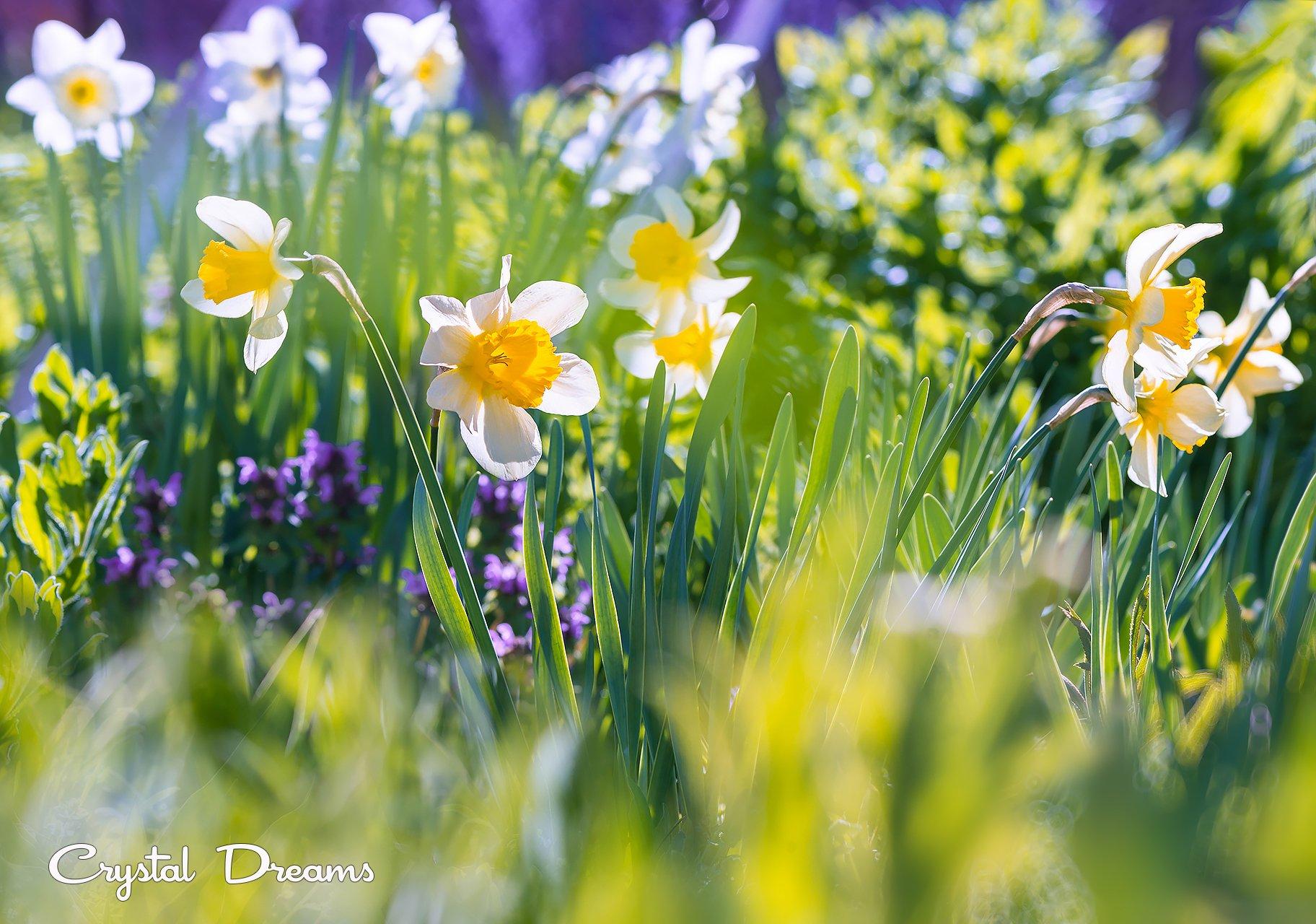 crystal dreams, macro, spring, color, art, nature, flowers, Крылова Татьяна