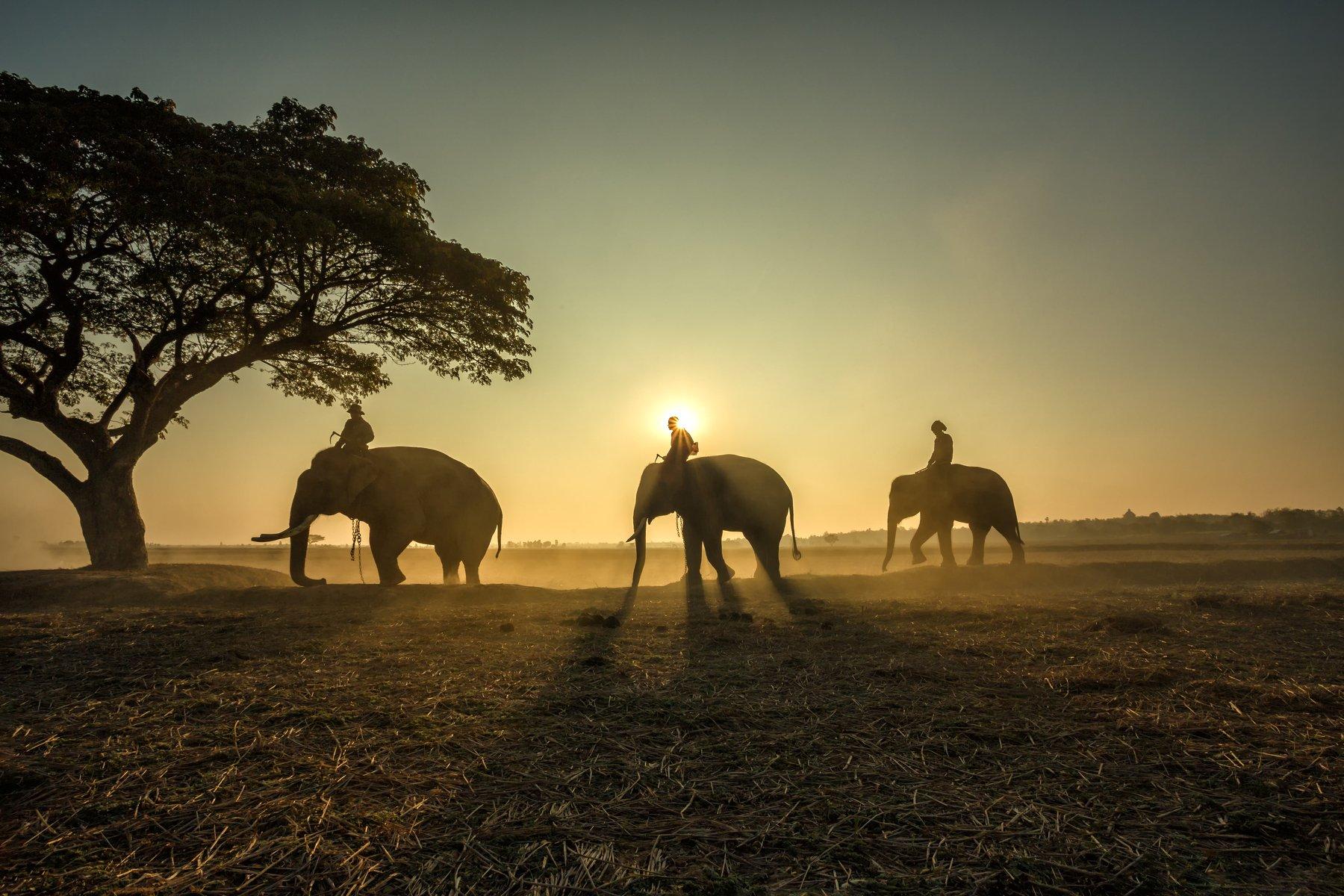animal,elephant,silhouette,People,safari,asia,, SUTIPORN SOMNAM