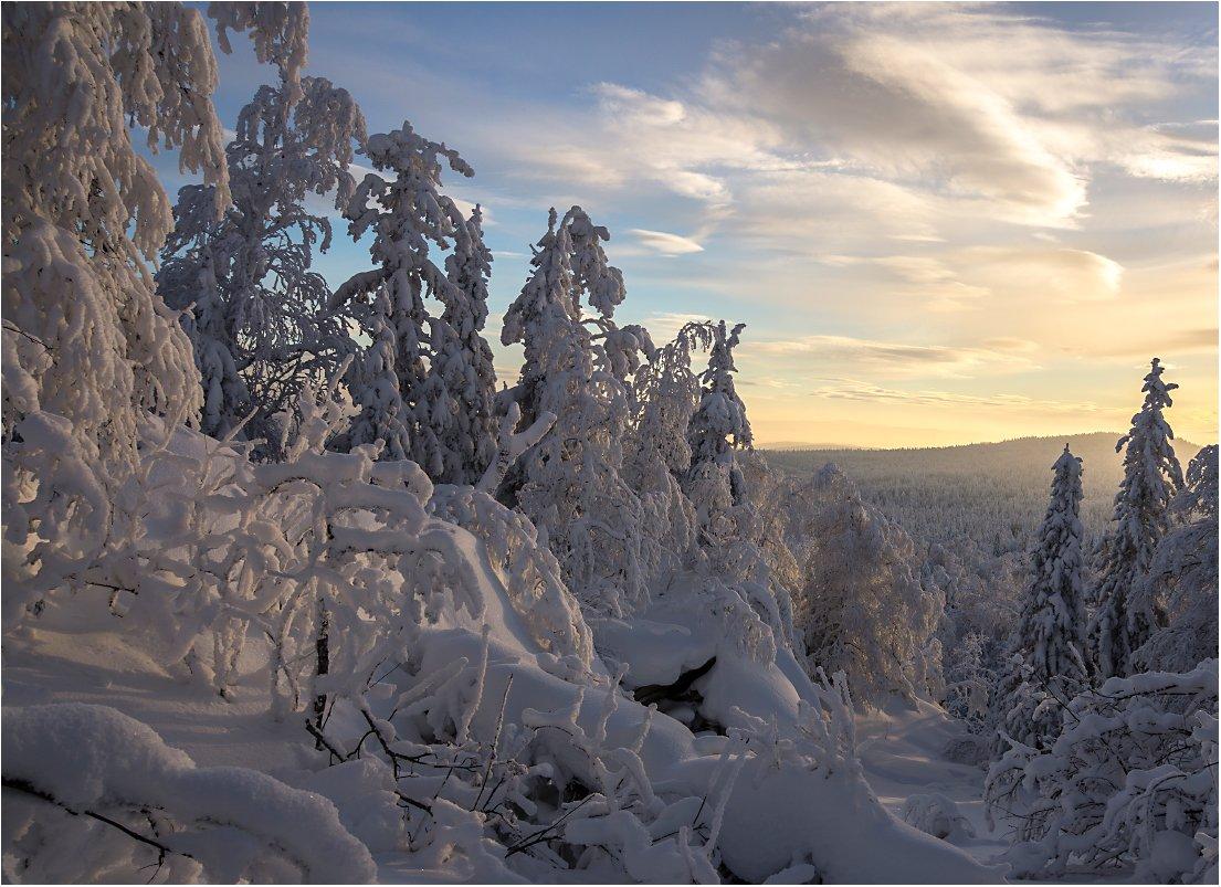 закат,снег,зима,деревья, Кондратьев Алексей