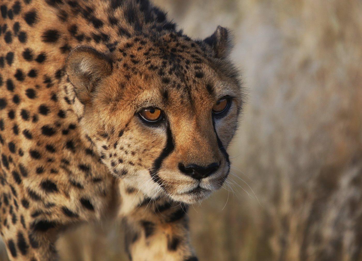 #loveafrica, mc, namibia, намибия, Маргарита Чернилова