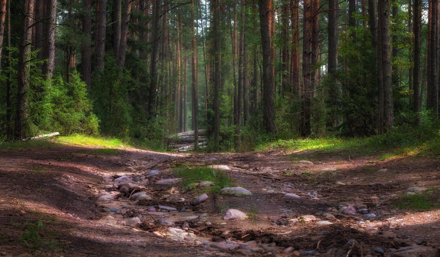лето, лес, дорога,, Сергей Шабуневич