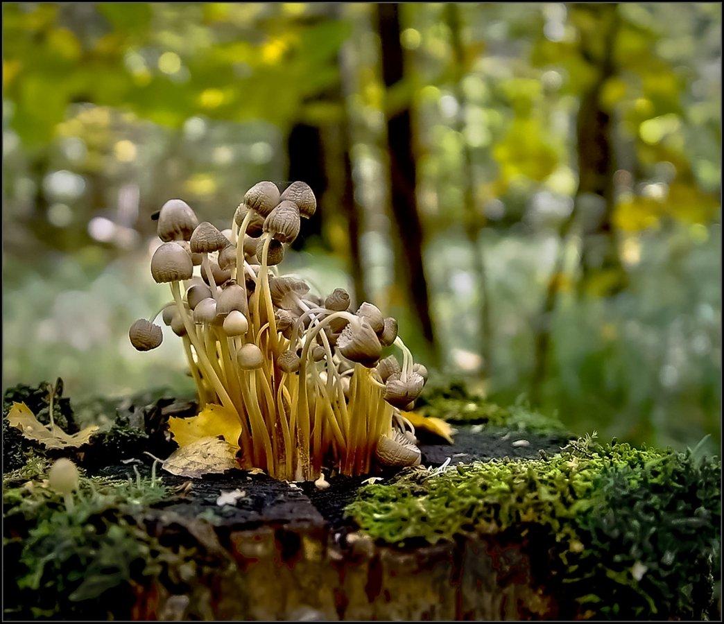 природа, грибы, лес, Виктор Парщиков