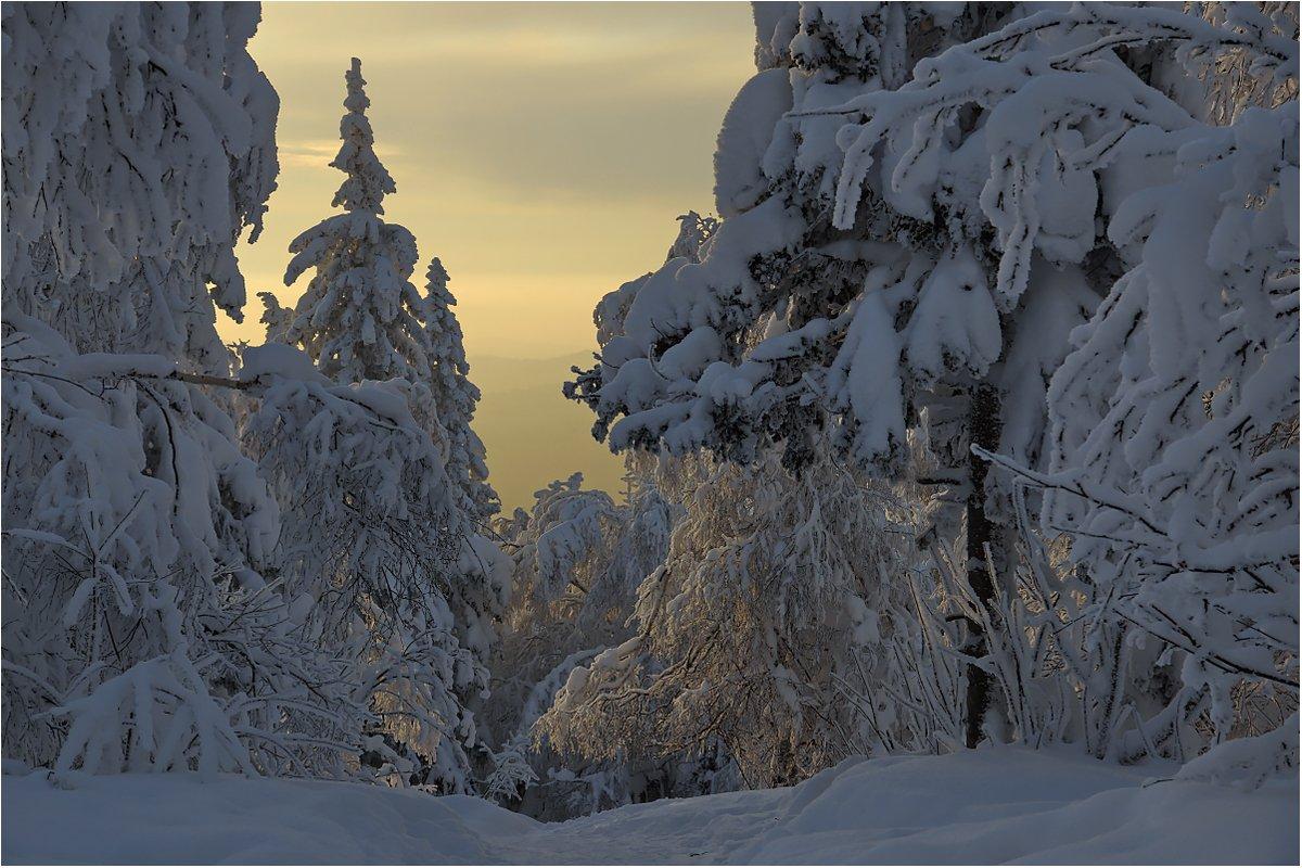 зима,закат,снег,деревья, Кондратьев Алексей