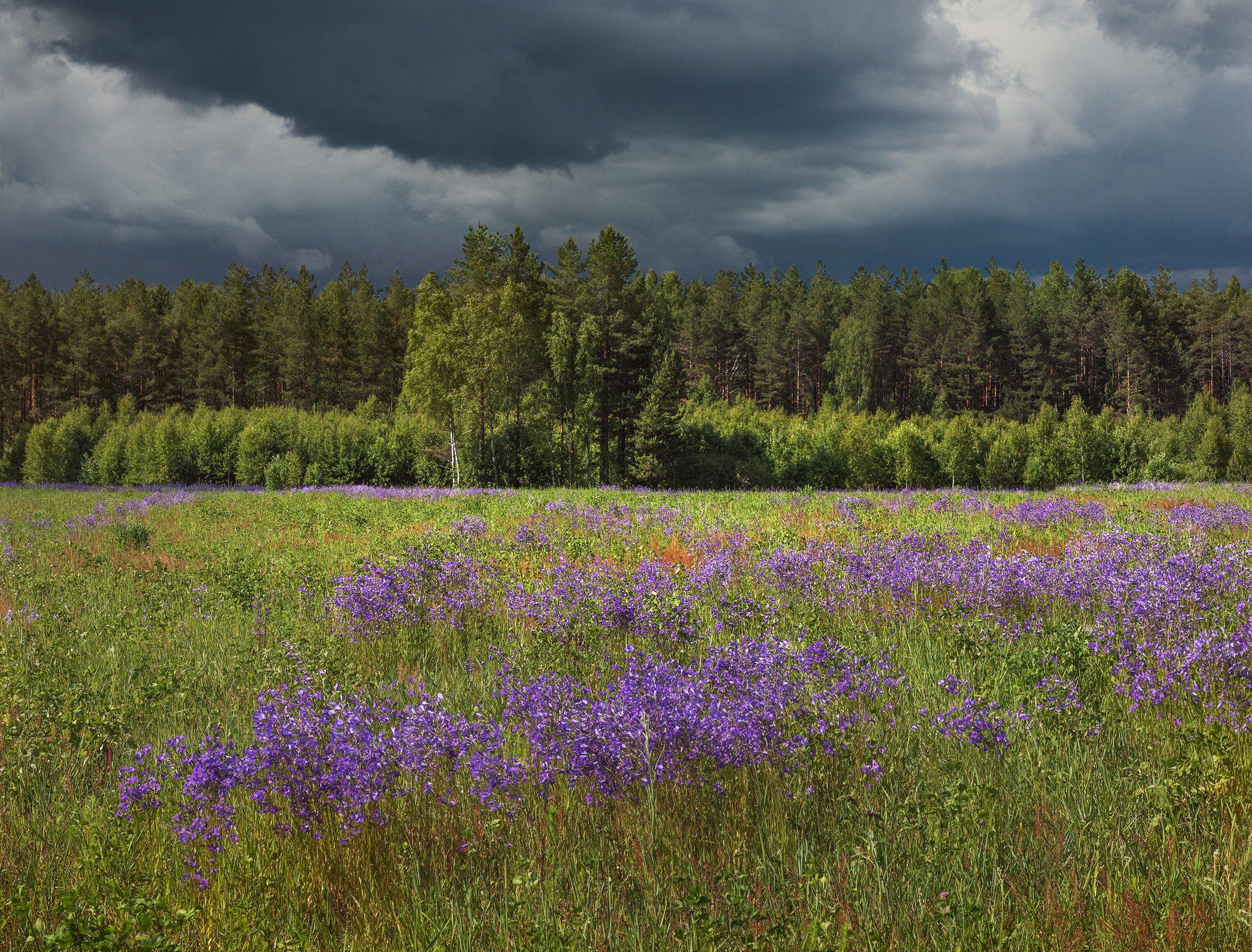 Лето, поле, лес, цветы, Владимир Рябков
