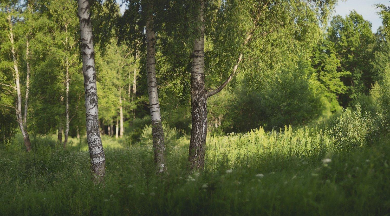 пушкин, царское село, спб, питер, лето, Таня She (Aiya)