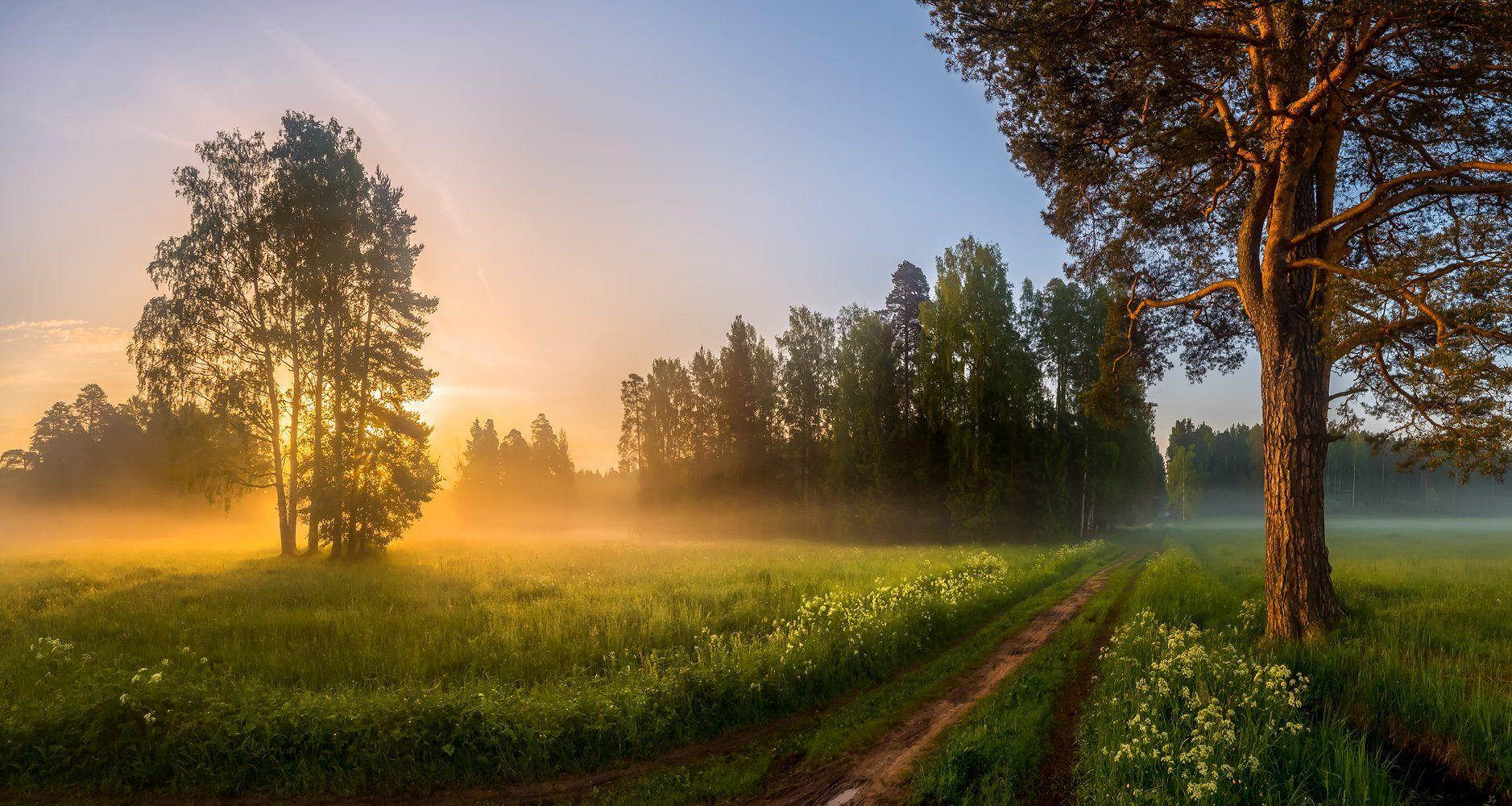 санкт-петербург, парк павловск, лето, дорожка, прогулка, туман, рассвет, сосна, отдых., Лашков Фёдор