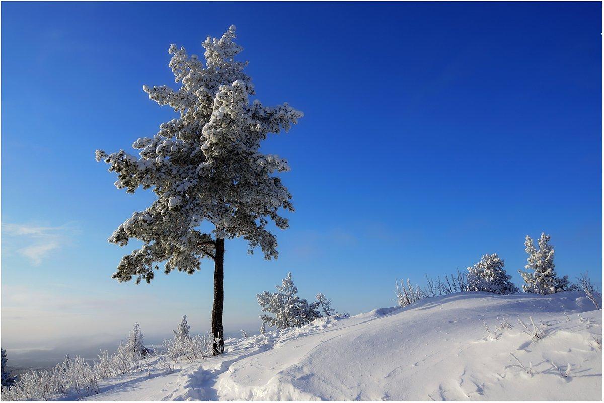 горы, снег, дерево, Кондратьев Алексей