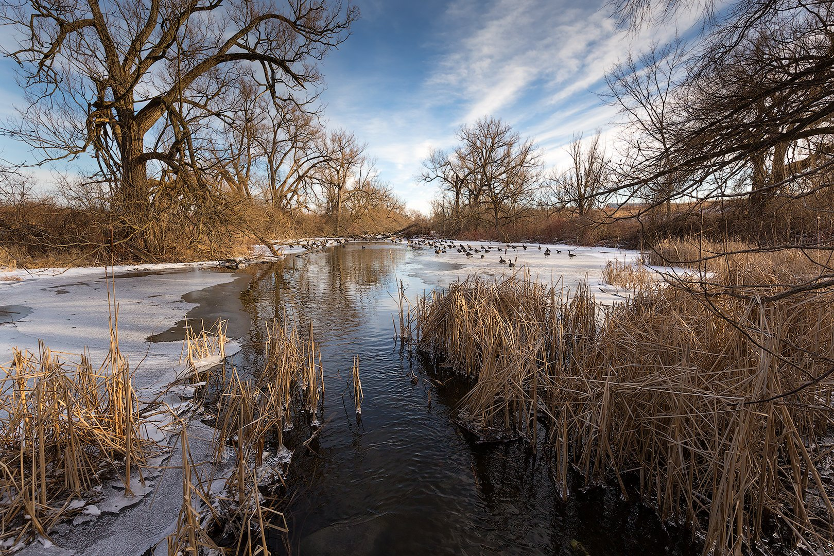spring, river, ice, trees, sun, geese, весна, река, лёд, деревья, солнце, гуси, G A S