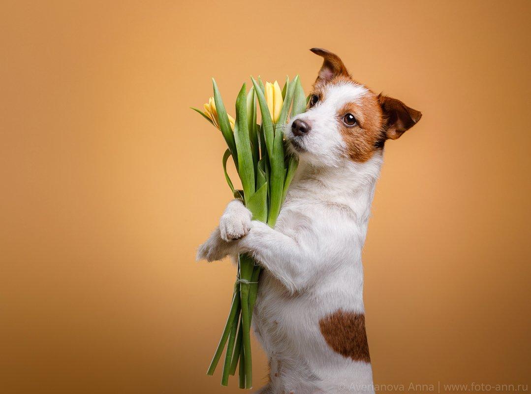 собака, 8 марта, весна, студия, мило, Анна Аверьянова