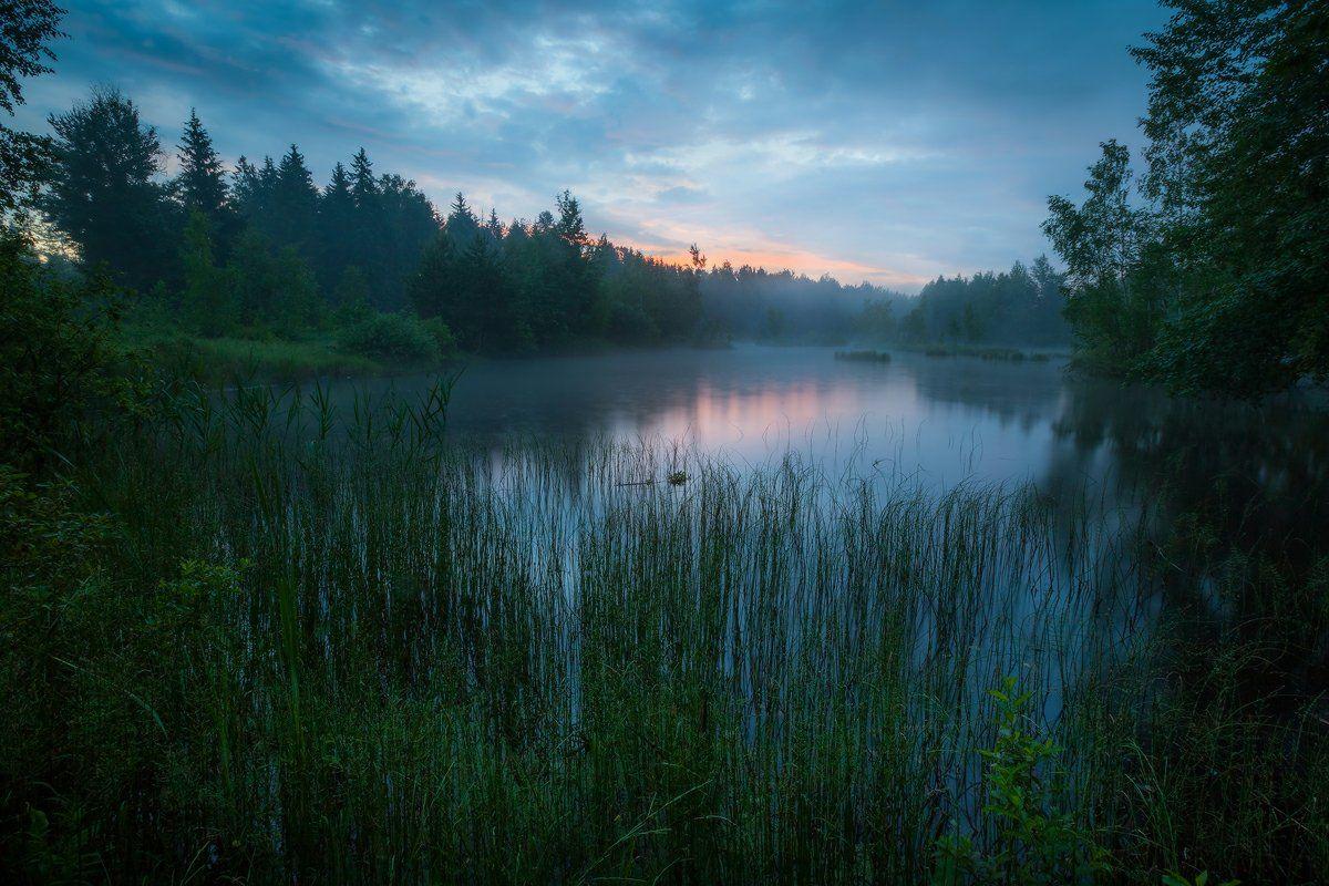 утро, лето, озеро, рассвет, лес, Копычко Михаил