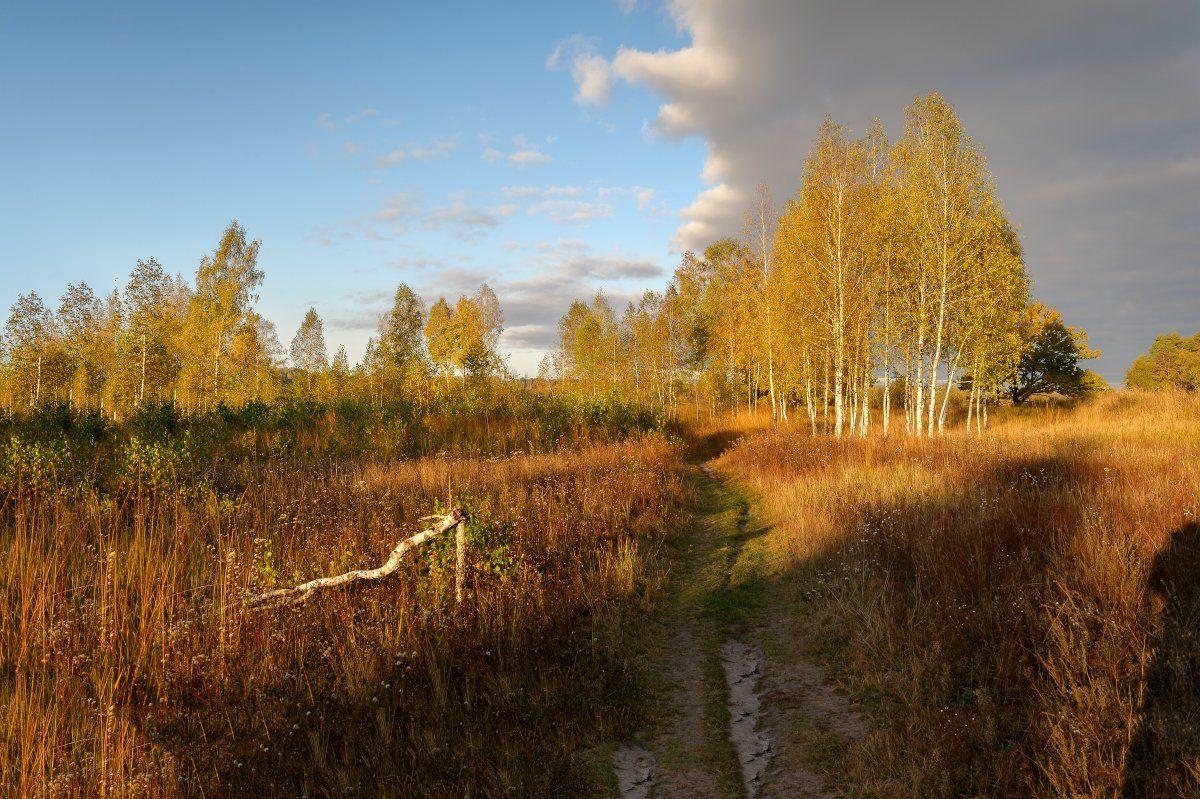 пейзаж,природа,осень,золотая осень,утр,рассвет,тропинка,березы,небо, Юлия Лаптева