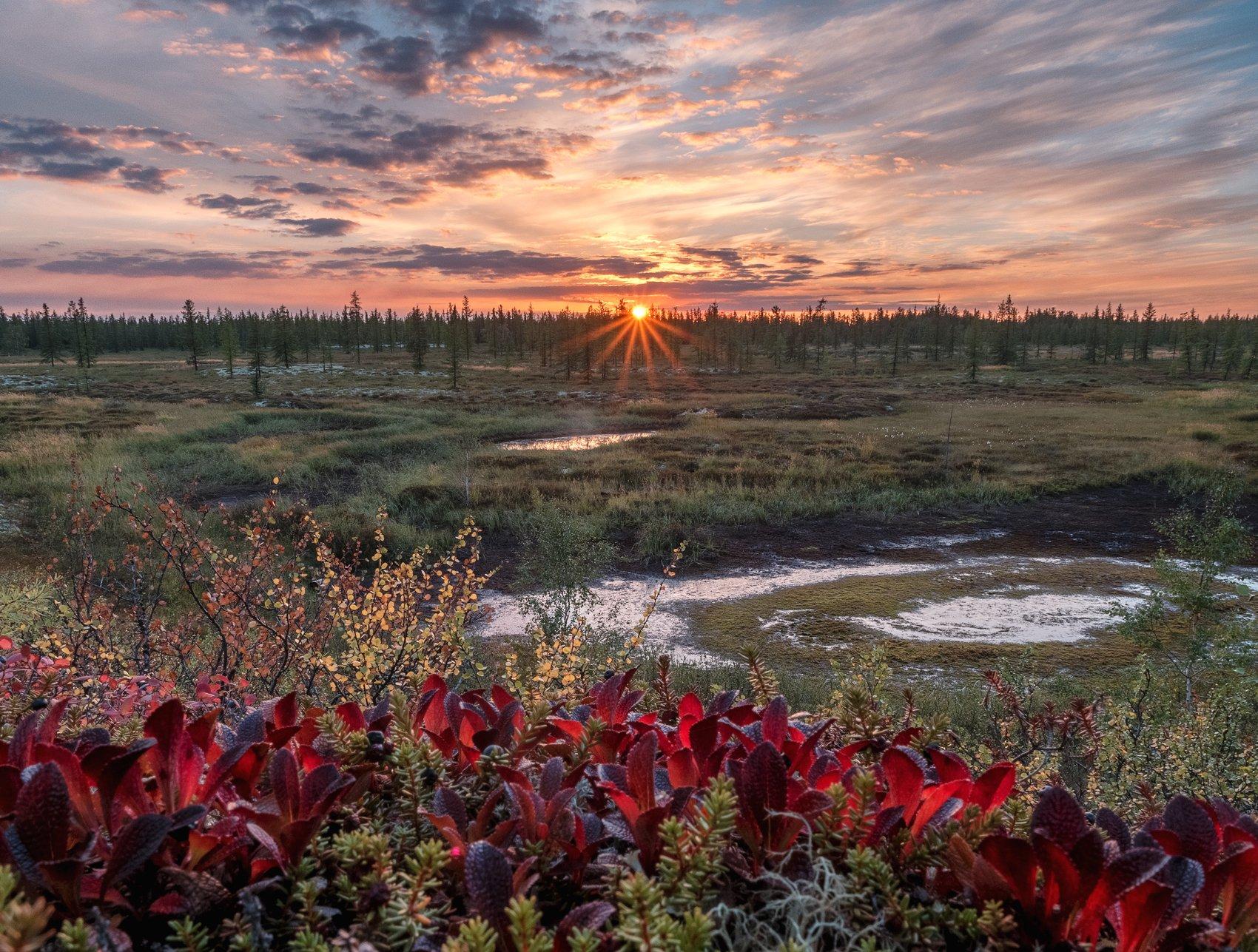 ямал, тундра, лето, закат, olympus, пейзаж, россия, Камиль Нуреев
