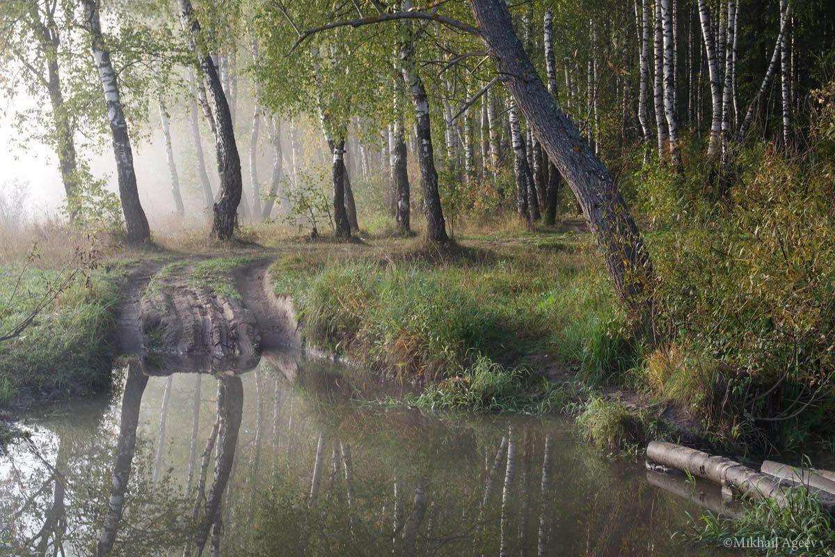 утро туман берёзы вода пейзаж, Михаил Агеев