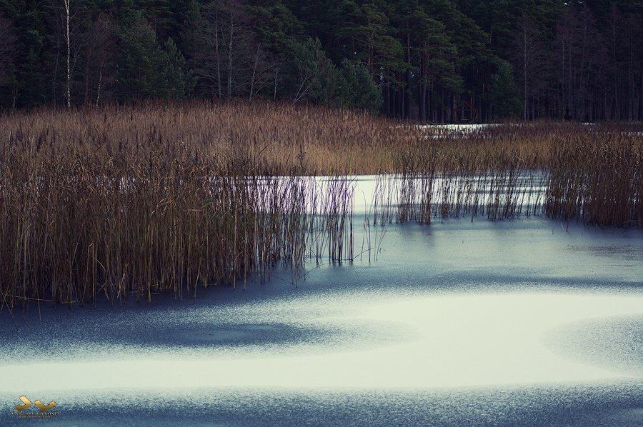 Lake, ice, forest, Jevgeni Ljubimtsev