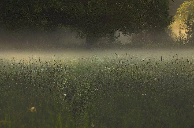рассвет, туман, питер, лето, царскоесело, пушкин, царское, Таня She (Aiya)