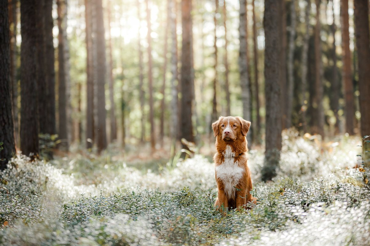 собака, лес, свет, природа, Анна Аверьянова