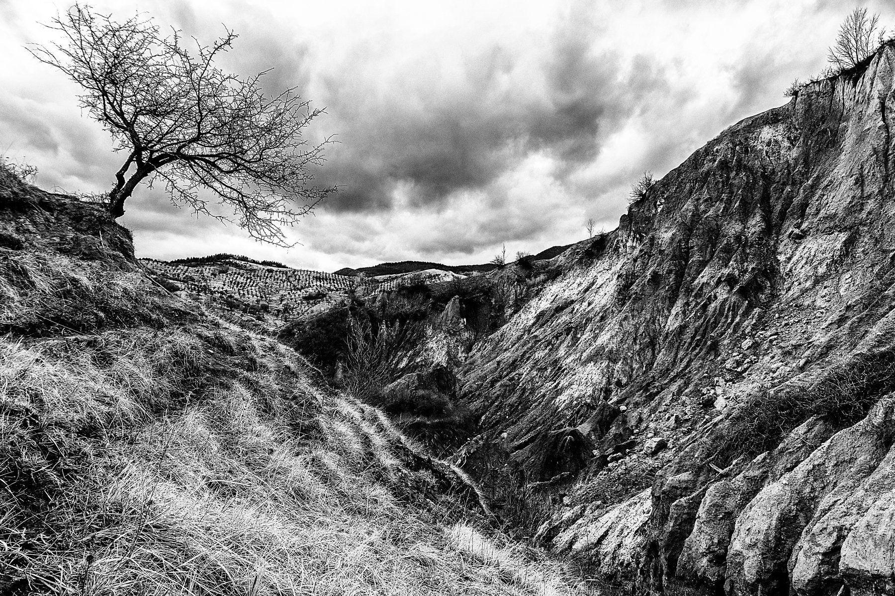 tree, ravine, lonely tree, Виктор
