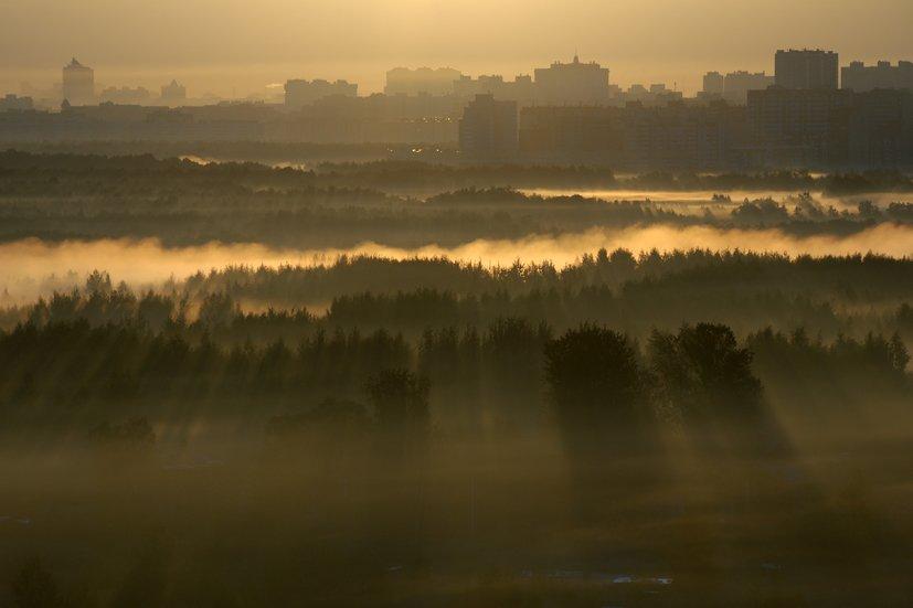 morning, Poletaev Ilya