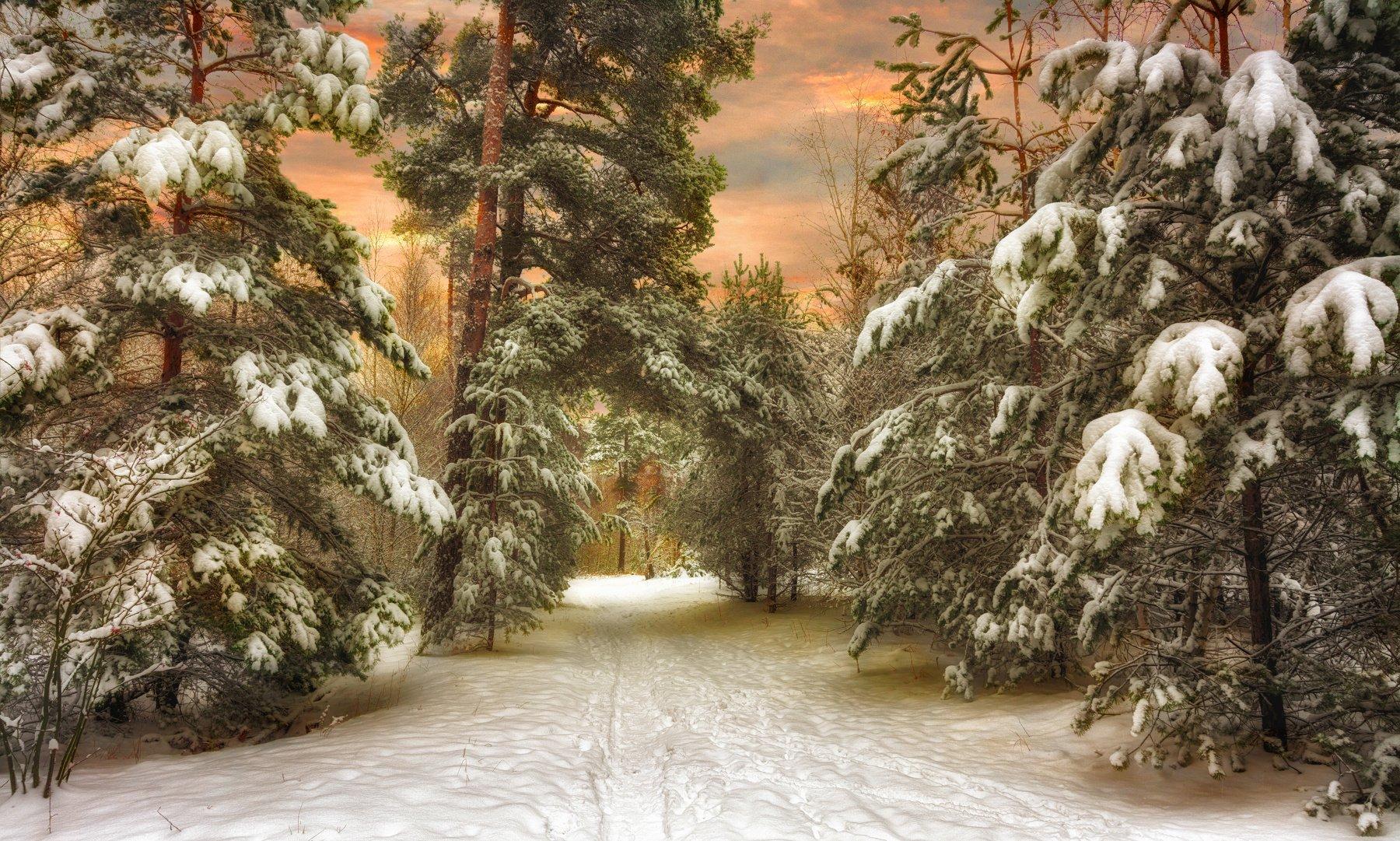 landscape, nature, природа, пейзаж, лес, зима, снег, заснеженные деревья, вечер, закат, небо, Михаил MSH