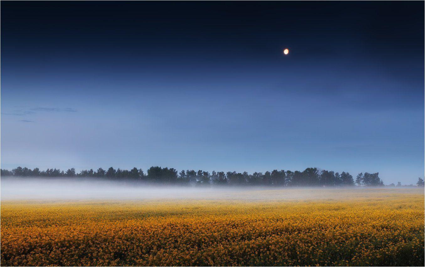 перед рассветом, поле, туман, луна,, Сергей Шабуневич