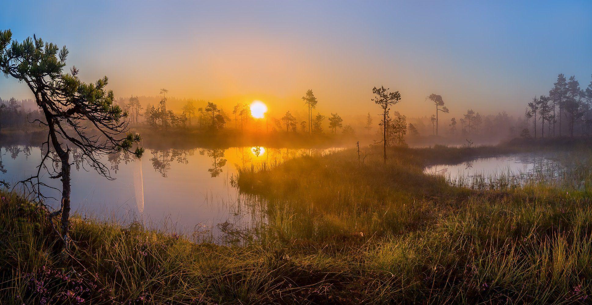 ленинградская область, озеро, болото, сосны, фотопроект, остров, лето, рассвет, туман, солнце, Лашков Фёдор