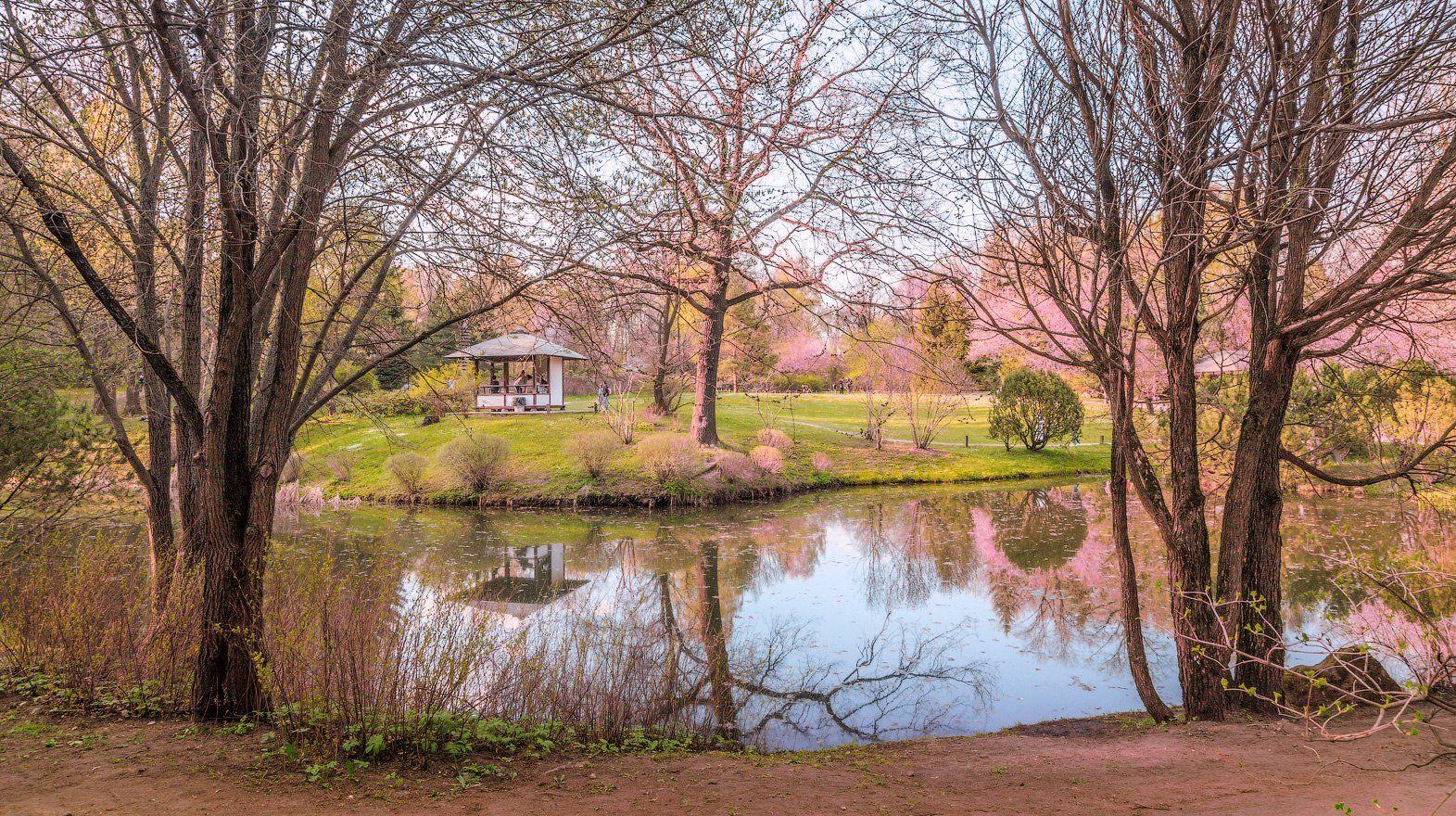 весна, сакура, цветение, цветы, япония, сад,, Виктор Климкин