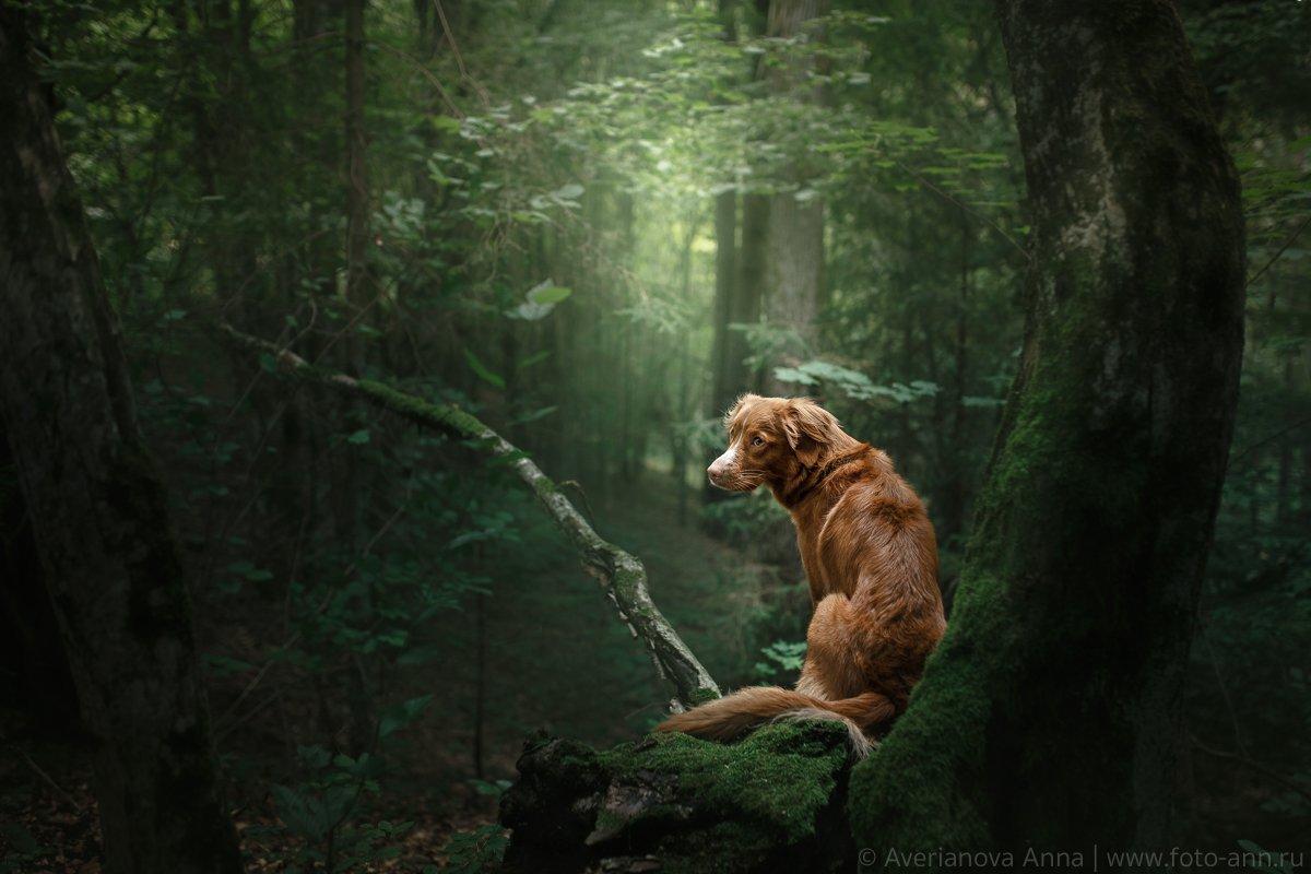 собака, лес, природа, Анна Аверьянова