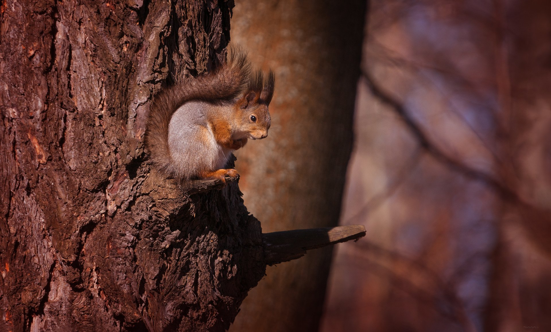 природа, лес, животные, Дмитрий Посевич