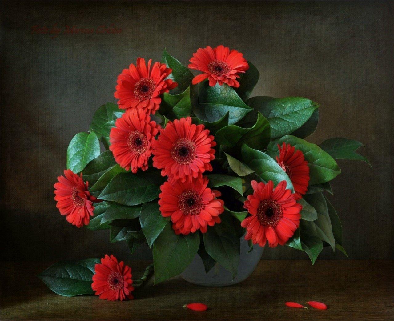 цветы гербера, Марина Орлова