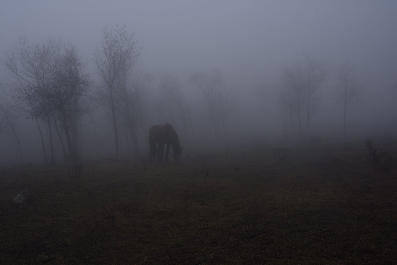 горы, утро, туман, луг, лошадка, Вьюшкин Игорь